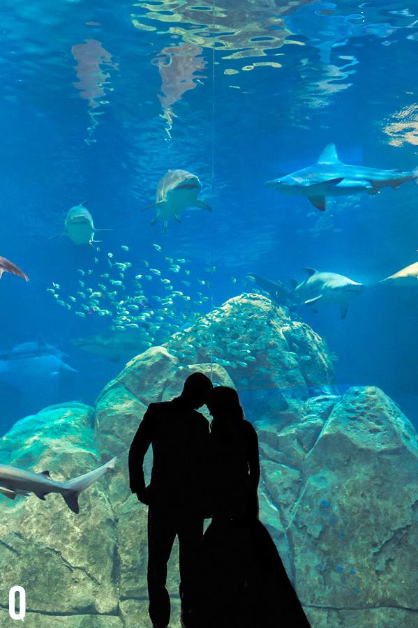 Courtney Darrick Camden Aquarium Wedding Photography